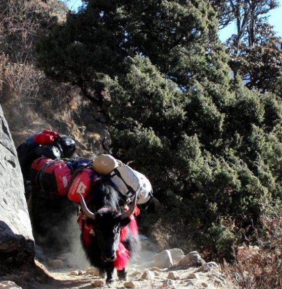 livelihood of sherpa