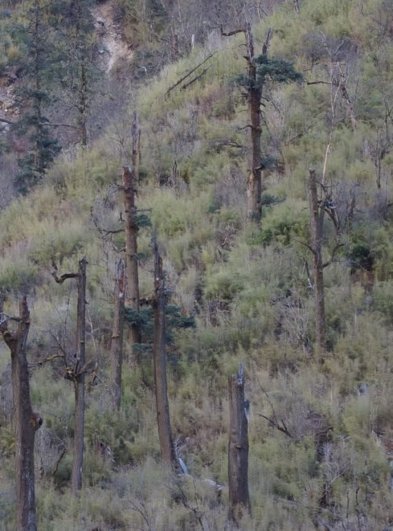 Short Glimpses of Forest Use in Langtang National Park and Buffer Zone